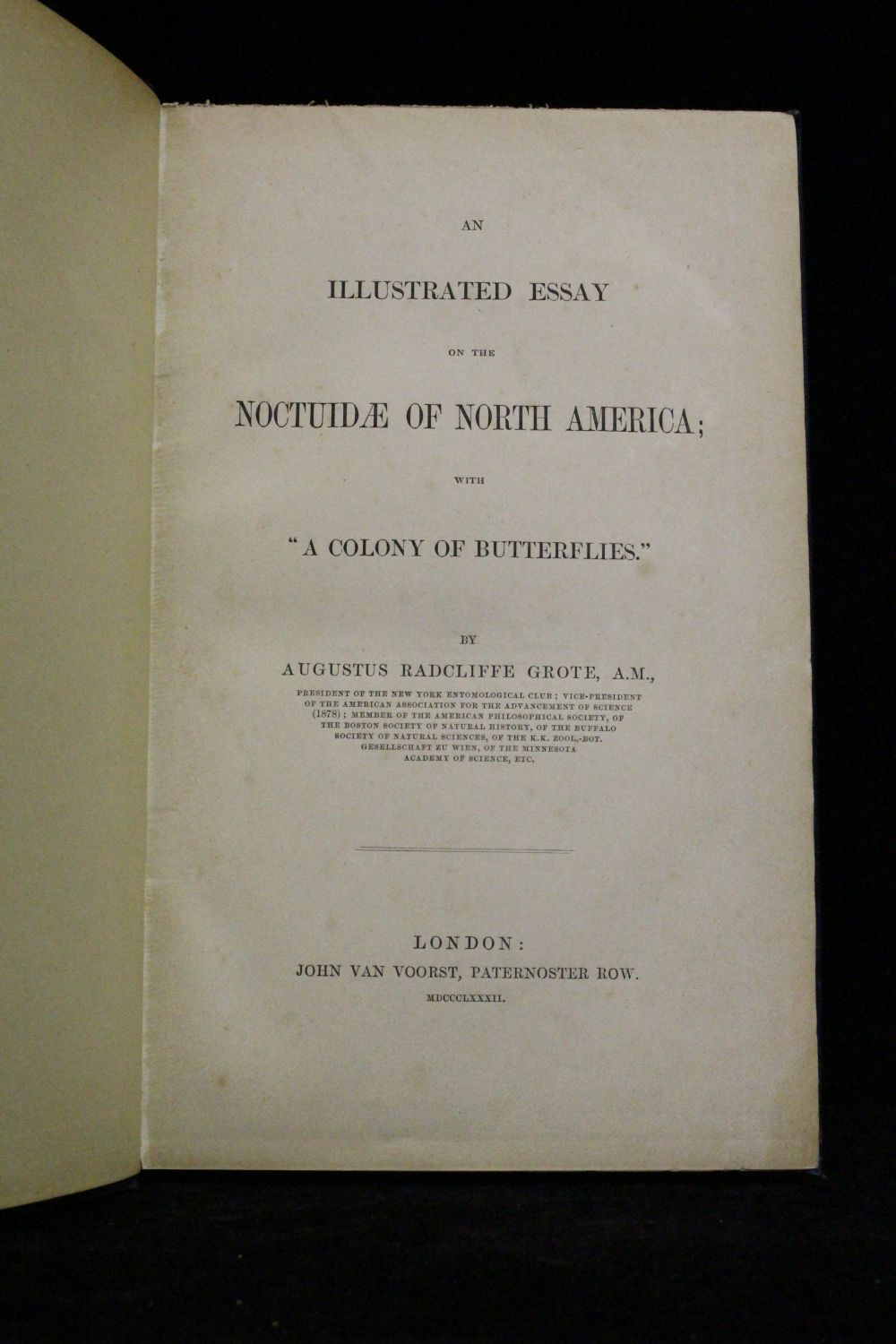 grote an illustrated essay on the noctuidae north american