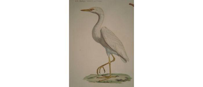Rueil-Malmaison : Meubles à secrets, secrets de meubles Crop2-h-300-w-700-barraband_jacques_zoologie-oiseaux-h-n-pl-8-planche-dessinee-par-jacques-barraband-et_1802_edition-originale_2_24827